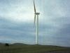 windmaster-w-cow.jpg